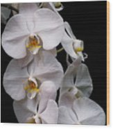 Aphrodite - White Orchid Wood Print