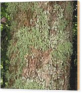 Appalachian Arbor Flora Wood Print