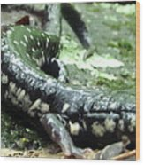 Appalachian Slimy Salamander Wood Print