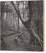Appalachian Trail Wood Print