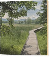 Appalachian Trail - Out Into The Light Wood Print
