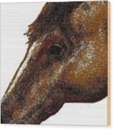 Appaloosa Eye Wood Print