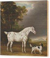 Appaloosa Horse And Spaniel Wood Print