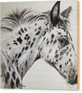 Appaloosa Wood Print
