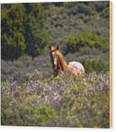 Appaloosa Mustang Horse Wood Print