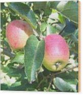 Apple 102 Wood Print