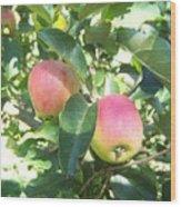 Apple 103 Wood Print