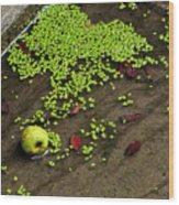 Apple And Algae In Dam Overflow Wood Print