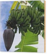 Apple Bananas Wood Print