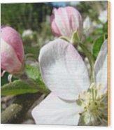 Apple Blossom Artwork Spring Apple Tree Baslee Troutman Wood Print