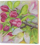 Apple Blossom Buds On A Greeting Card Wood Print
