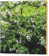 Apple Blossom Digital Painting Wood Print