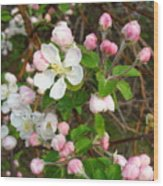 Apple Blossom Pink Wood Print