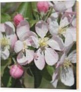 Apple Blossom Time Wood Print