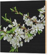 Apple Blossoms 2 Wood Print