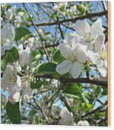 Apple Blossoms Art Prints 60 Spring Apple Tree Blossoms Blue Sky Landscape Wood Print