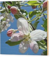 Apple Blossoms Art Prints Blue Sky Spring Baslee Troutman Wood Print