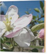 Apple Blossoms Art Prints Canvas Blue Sky Pink White Blossoms Wood Print