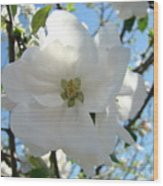 Apple Blossoms Art Prints Canvas Spring Tree Blossom Baslee Troutman Wood Print
