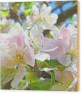 Apple Blossoms Art Prints Spring Trees Baslee Troutman Wood Print