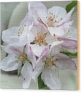 Apple Blossoms From My Hepburn Garden Wood Print