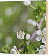 Apple Blossoms Wood Print