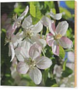 Apple Blossoms Square Wood Print