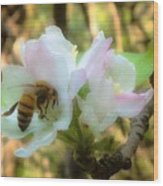 Apple Blossoms With Honey Bee Wood Print
