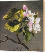 Apple Blossomss Wood Print