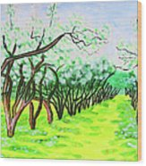 Apple Garden In Blossom Wood Print