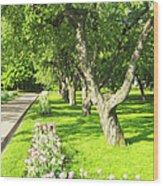 Apple Garden Wood Print
