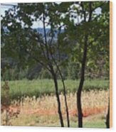 Apple Hill Trees Wood Print