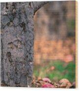 Apple Not Far From Tree Wood Print