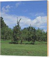 Apple Orchard At Vineyard Wood Print
