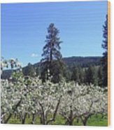 Apple Orchard In Bloom Wood Print