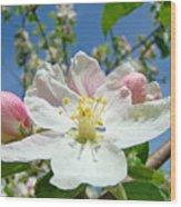 Apple Tree Blossom Art Prints Springtime Nature Baslee Troutman Wood Print
