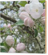 Apple Tree Blossoms Art Prints Apple Blossom Buds Baslee Troutman Wood Print
