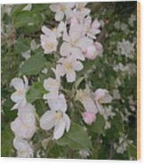 Apple Tree In Bloom Wood Print