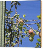 Apple Tree With Apples And Flowers. Amazing Nature Wood Print