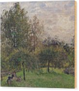 Apple Trees And Poplars In The Setting Sun Wood Print by Camille Pissarro
