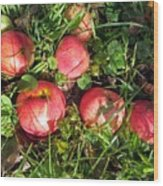 Apples From My Garden Wood Print