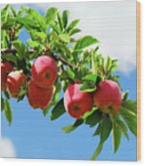 Apples On A Branch Wood Print