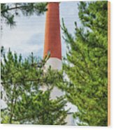 Approach To Barnegat Light Wood Print