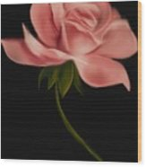 Apricot Beauty Rose Wood Print