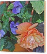 Apricot Begonia 1 Wood Print