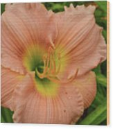 Apricot Day Lily Wood Print