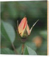 Apricot Rose Bud 3 Wood Print
