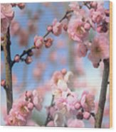 Apricot Tree Blossoms Wood Print