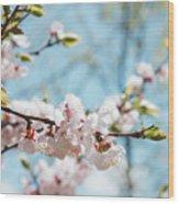 Apricots Bloom Wood Print