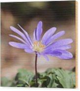 April Grecian Wind Flower  Wood Print